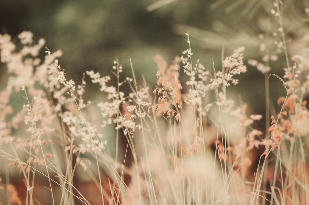 girlanxietyflowers16